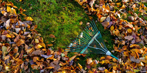 JMC Property Management , LLC from Wanamingo, MN offers a wide range of landscape management services that includes fall cleanup and spring clean up seasonal property clean-up service.